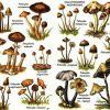 Псилоцибнсодержащие грибы растущие в дикой природе)