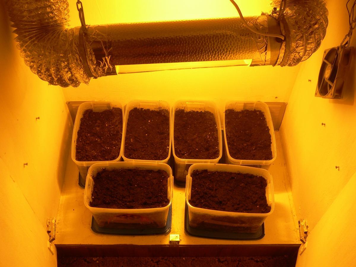 Прибор для выращивания конопли как конопля цветет видео