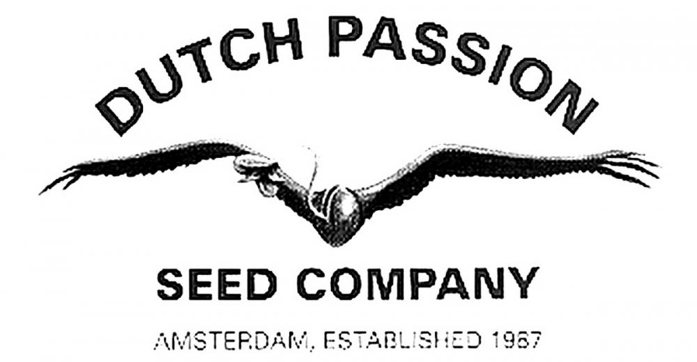 dutch лого.jpg