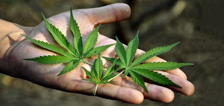 cannabis cancer.jpg