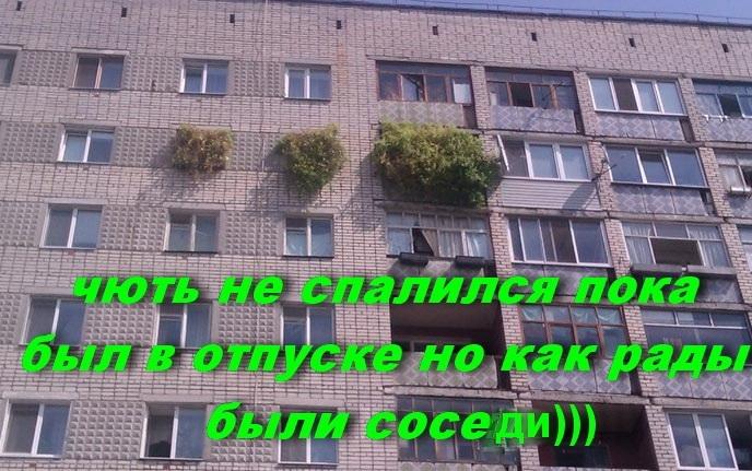 post-24554-0-47324500-1472048629_thumb.jpg