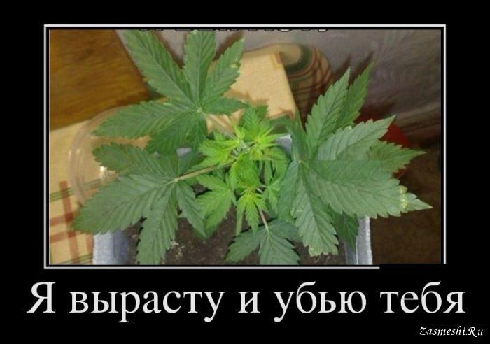 post-35597-0-28729500-1471974571_thumb.jpeg