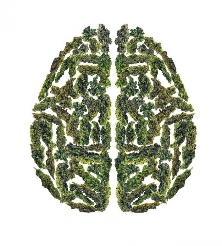 cannabis brain.jpg