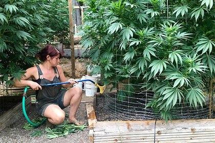 cannabis usa.jpeg