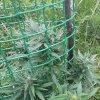mazar extra autofem bulk seeds bank
