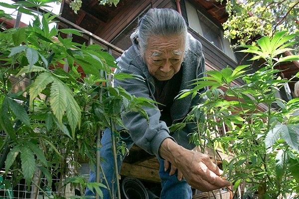 china marijuana.jpeg