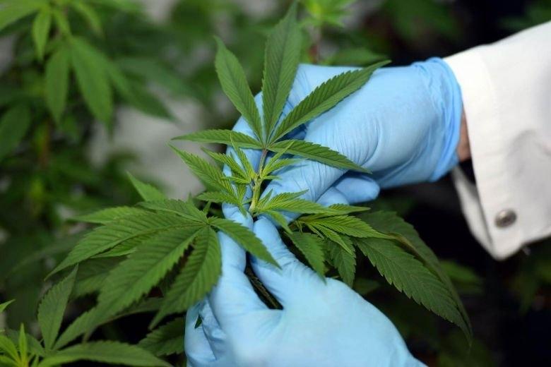 sri lanka cannabis.jpg