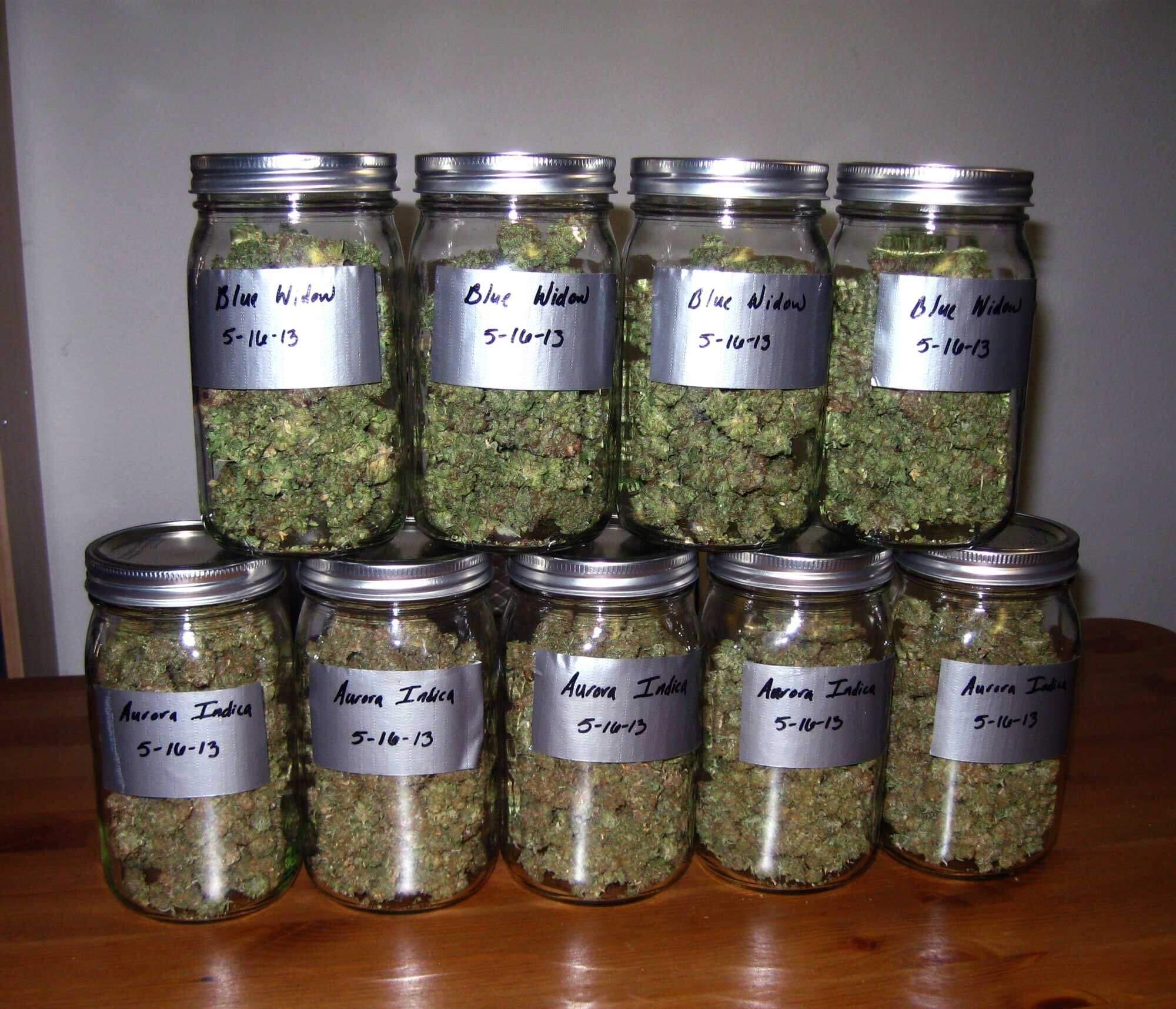 Пролечка марихуаны что это посадить коноплю в огороде