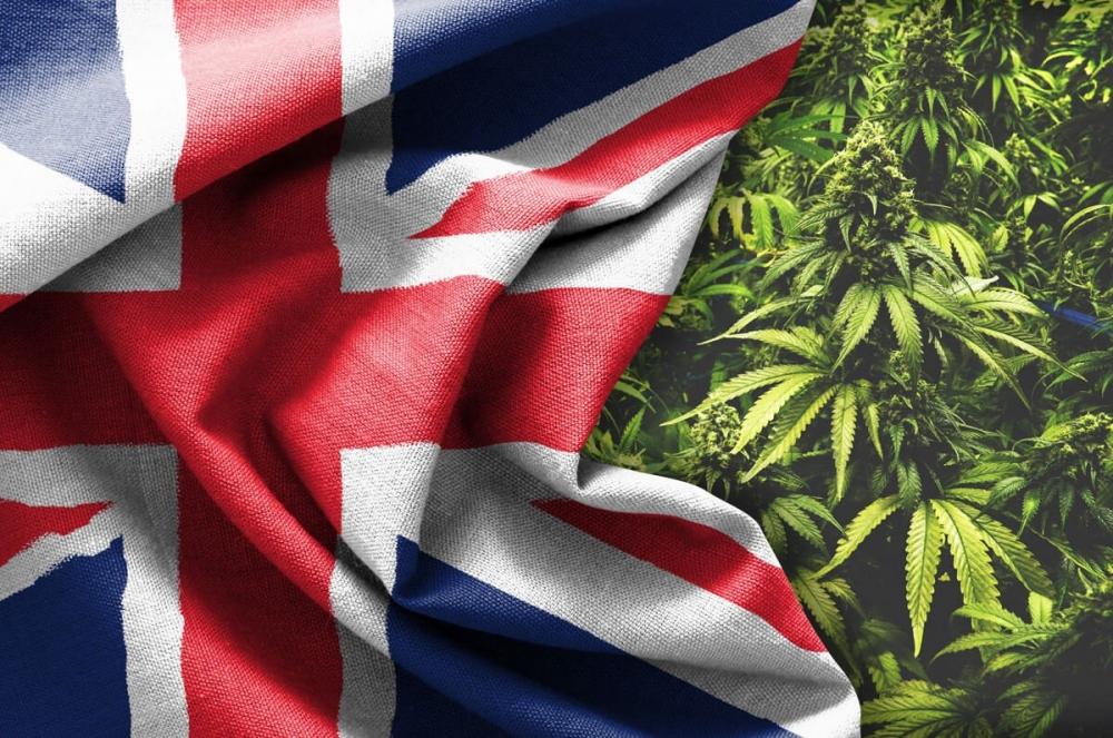 uk cannabis.jpg