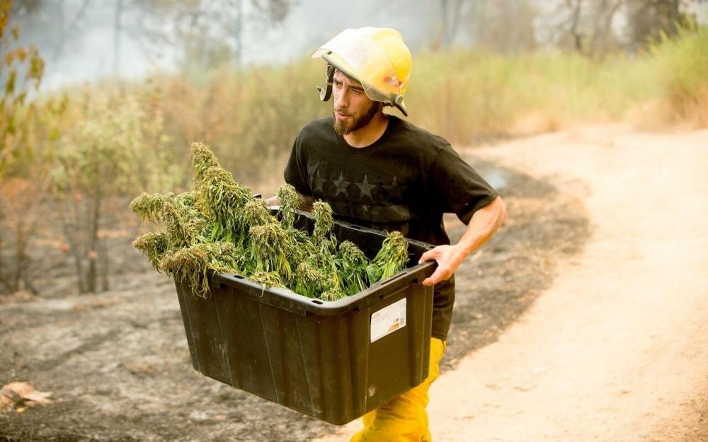 save marijuana.jpg
