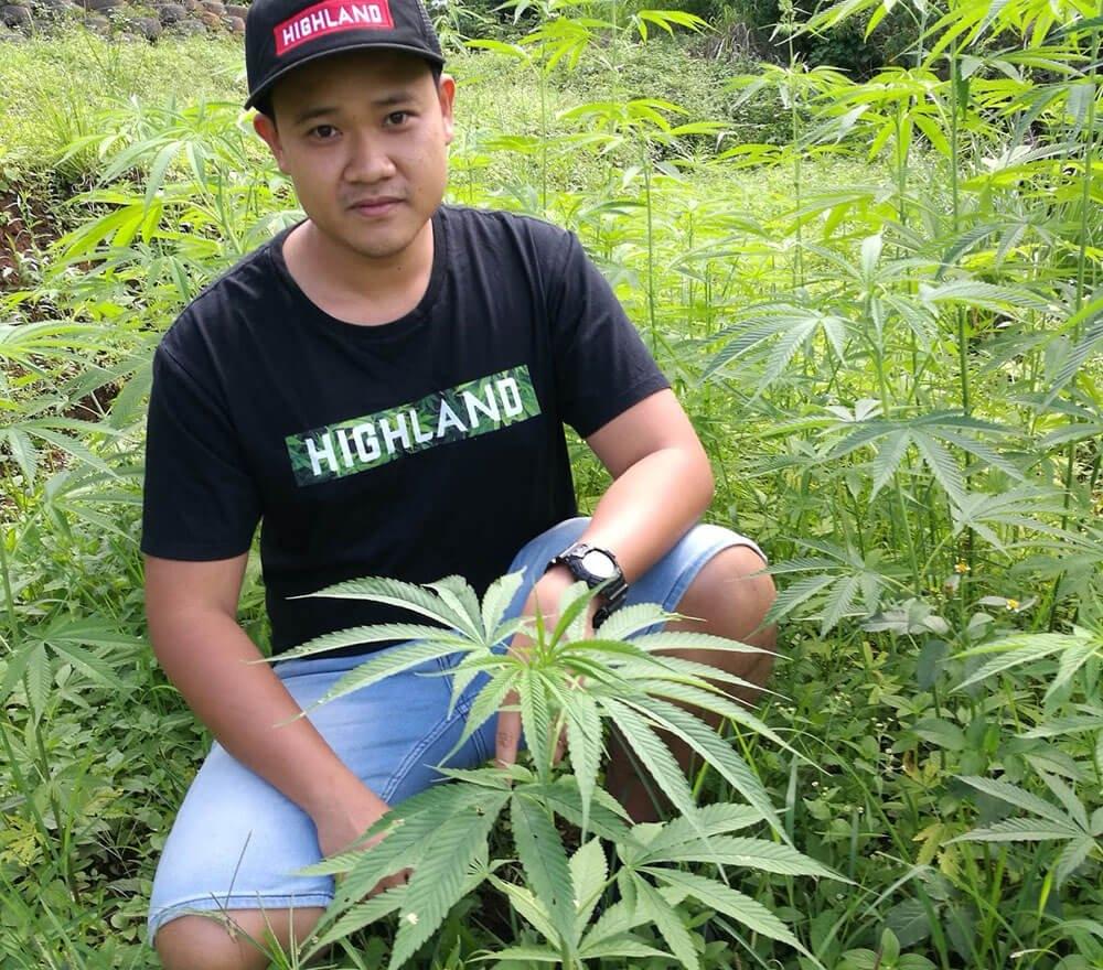cannabis thailand.jpg