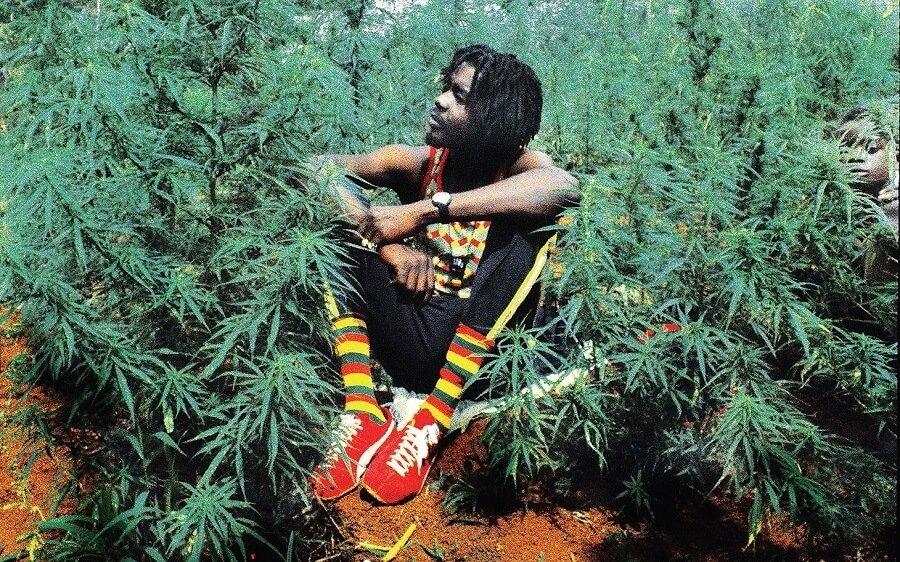 zimbabwe marijuana (1).jpg