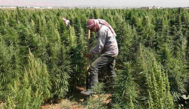 lebanon marijuana (1).jpg