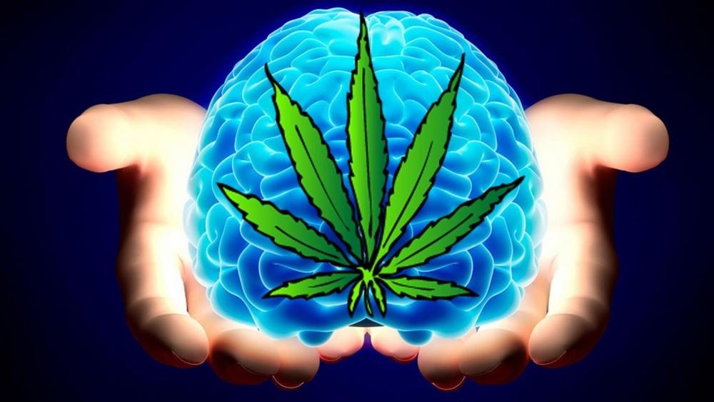 cannabis-brain (1).jpg