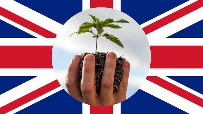 uk marijuana (2).jpg