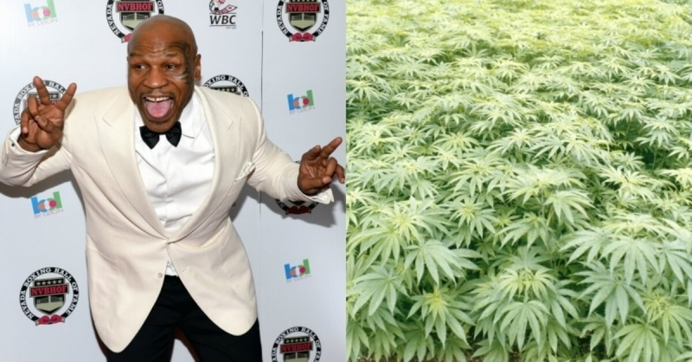 tyson marijuana (1).jpg
