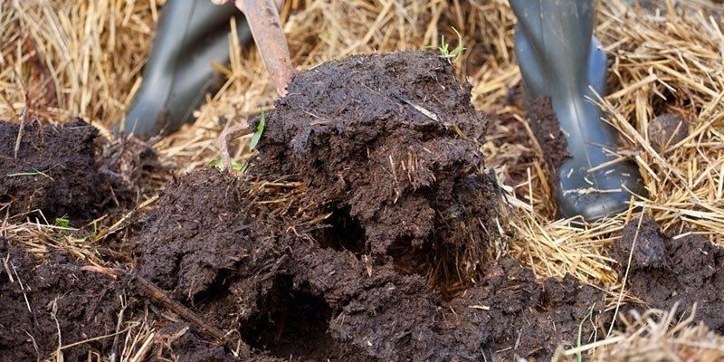 organic fertilizer.jpg