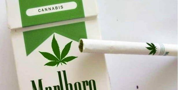 marlboro marijuana.jpg