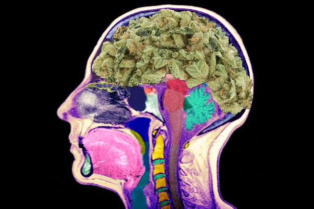 cannabis brain.png