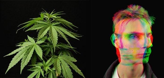 cannabis psychosis.jpg