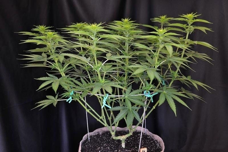 12main-lining-for-flat-indoor-plants.thumb.jpg.f4e7480b5332a9df2bbdcf8882e397e8.jpg