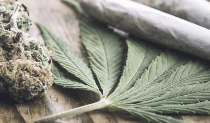 cannabis-harm (1).png