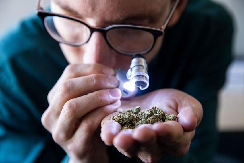 cannabis-somelier.jpg