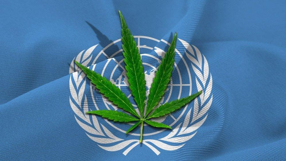 un cannabis.jpg