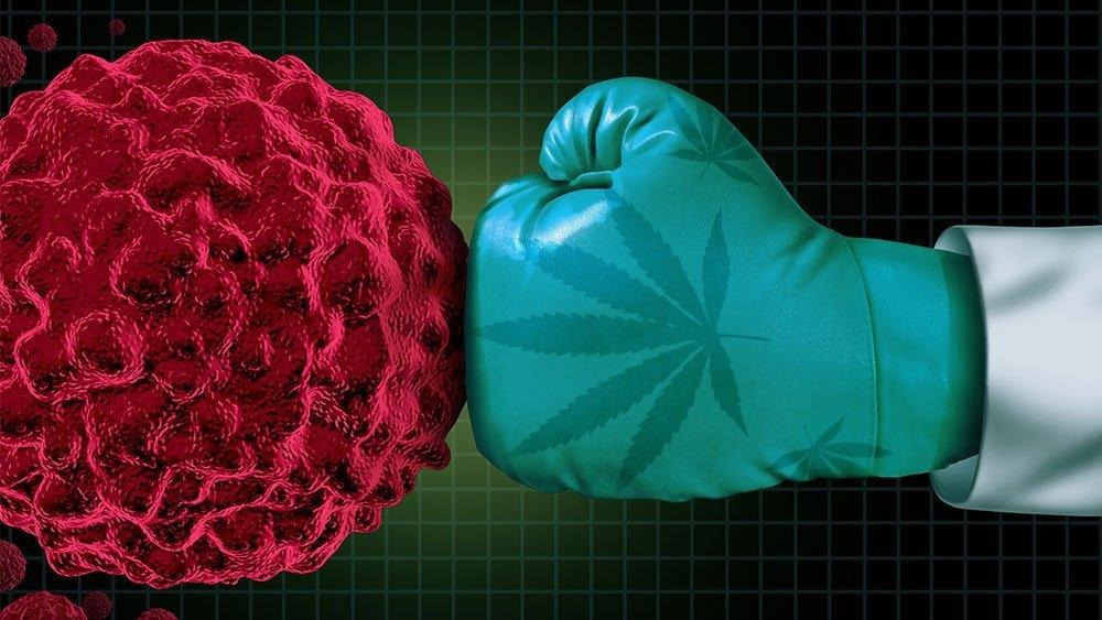cannabis-vs-cancer.jpg