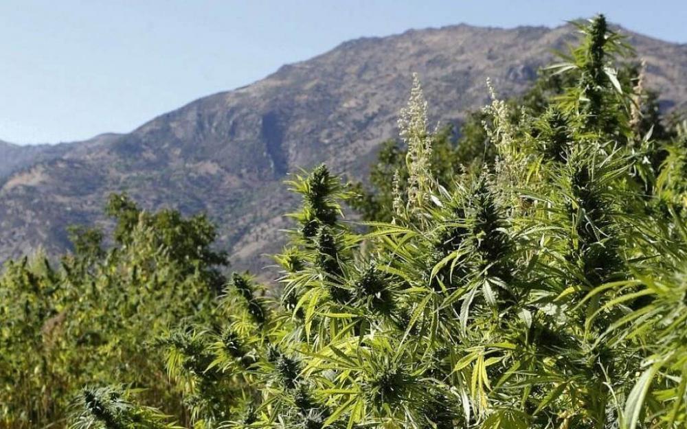 cannabis-mountains (1).jpg