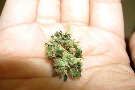 Шишке вес конопли как ухаживать за марихуаной до цветения