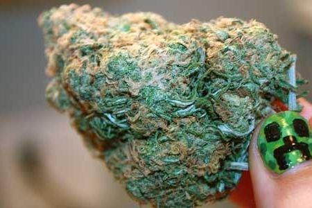 Огромная шишка марихуаны купить семена конопляные с большим содержанием тгк купить в украине