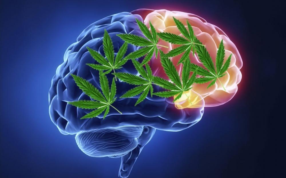 cannabis-brain-cells.jpg