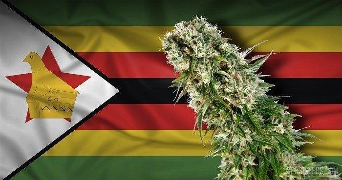 cannabis-in-zimbabwe.jpg