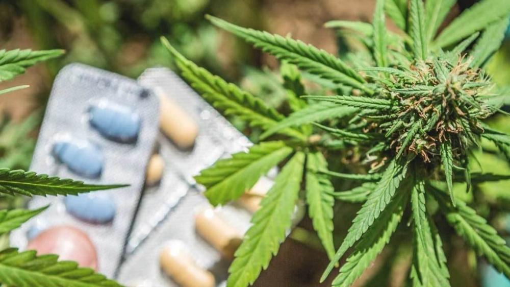 cannabis-opioids.jpg
