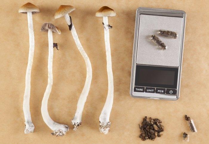 microdosing-psychedelic-mushrooms.jpg