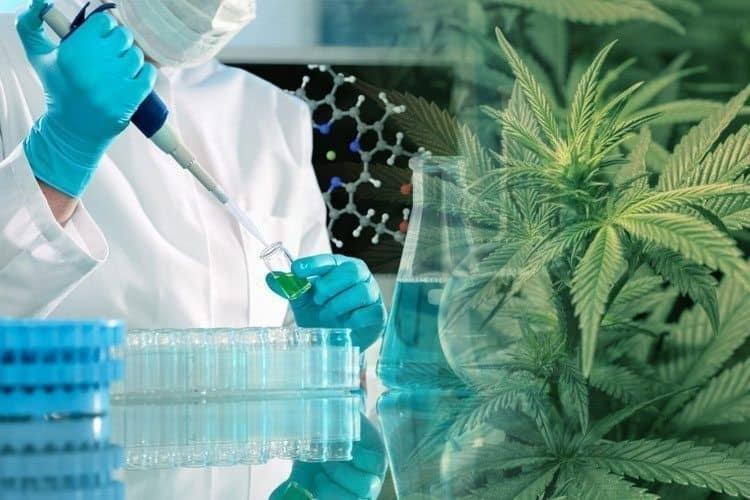 research-cannabis-cu.jpg