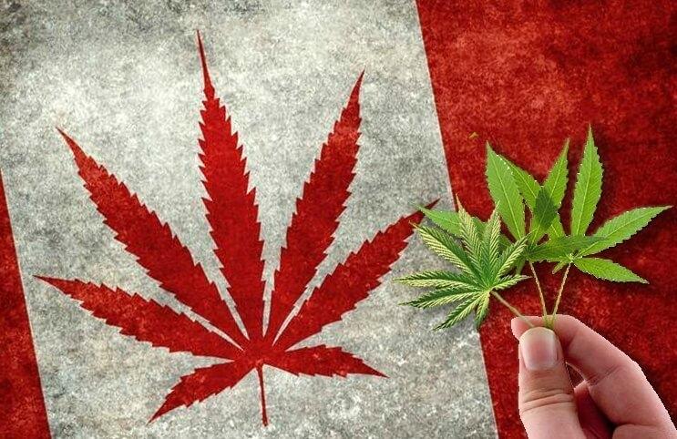 illegal-marijuana-sale-drop (1).jpg