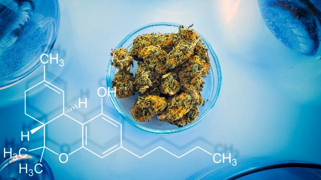 cannabis-in-bioreactor.png