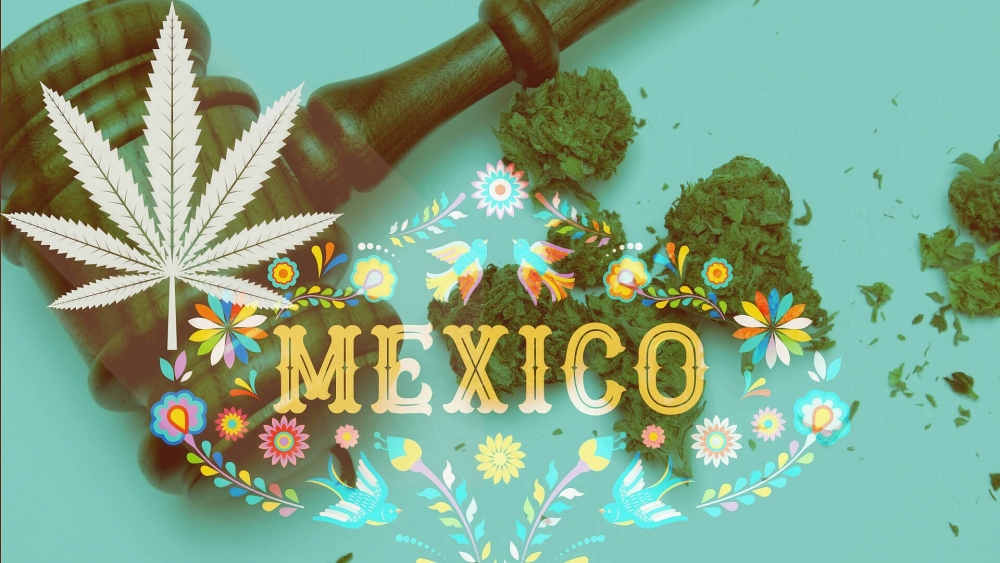 mexico-cannabis-law.jpg