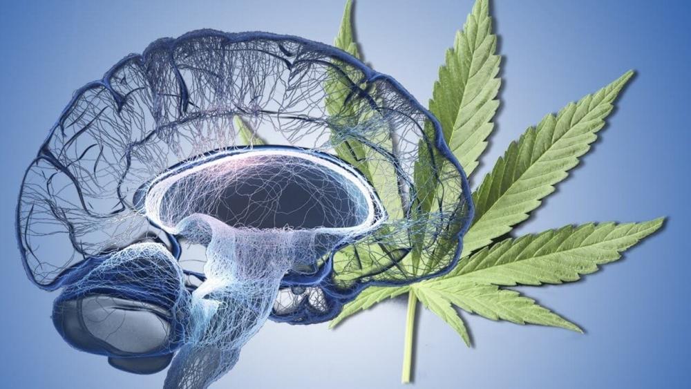 cannabis-iq (1).jpg