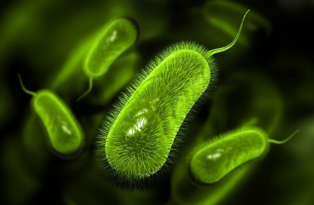 cannabis-bacteria-infection.jpg
