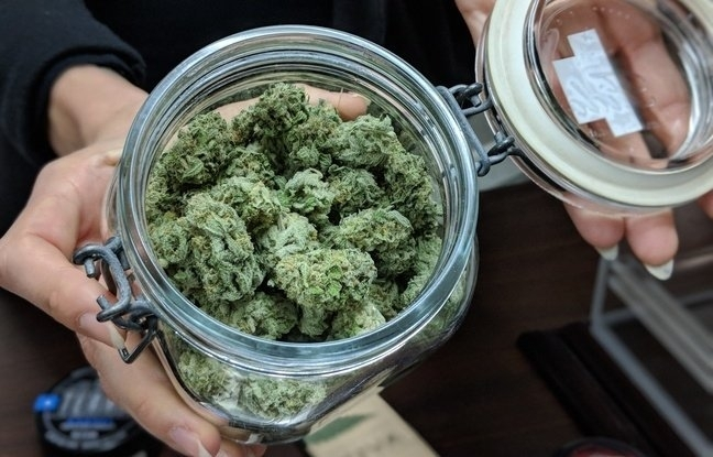 store-cannabis-guide.jpg