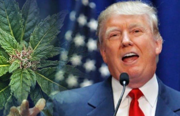 trump-cannabis-reform(1).jpg