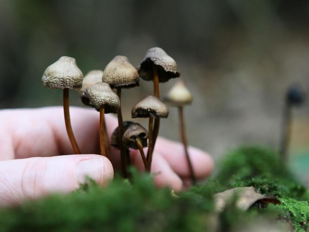 vermont-psilocybin-mushrooms.jpg