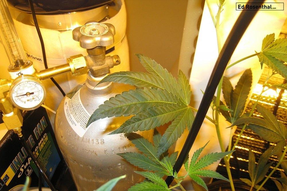 cannabis-co2.jpg