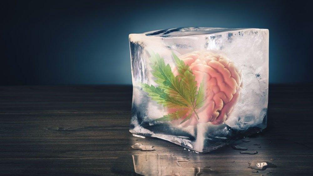 cannabis-fake-memory.jpg