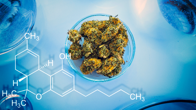 cannabis-spectrometer.png