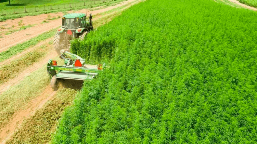 cannabis-ukraine-down(1).png