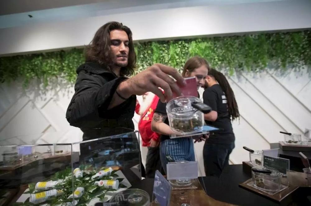 elias-theodorou-cannabis.jpg